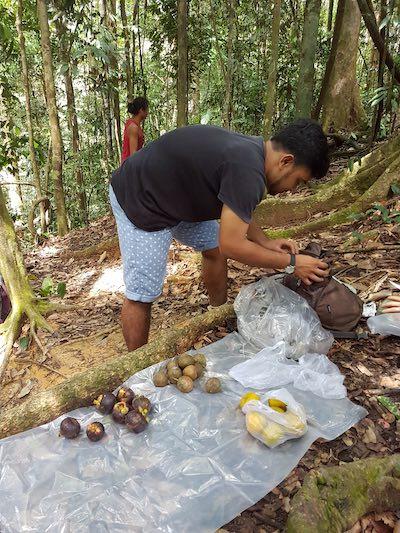 jungle trekking budget in sumatra