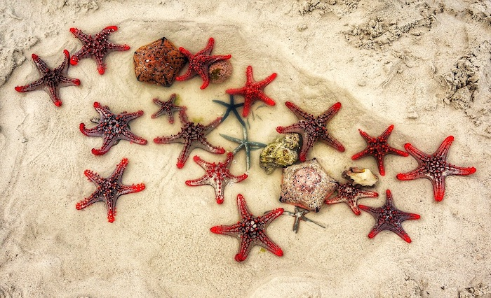 finding starfish on zanzibar beach
