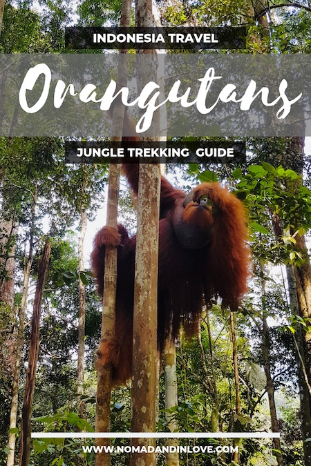 pinterest save image for hiking and jungle trekking tours in indonesia bukit lawang