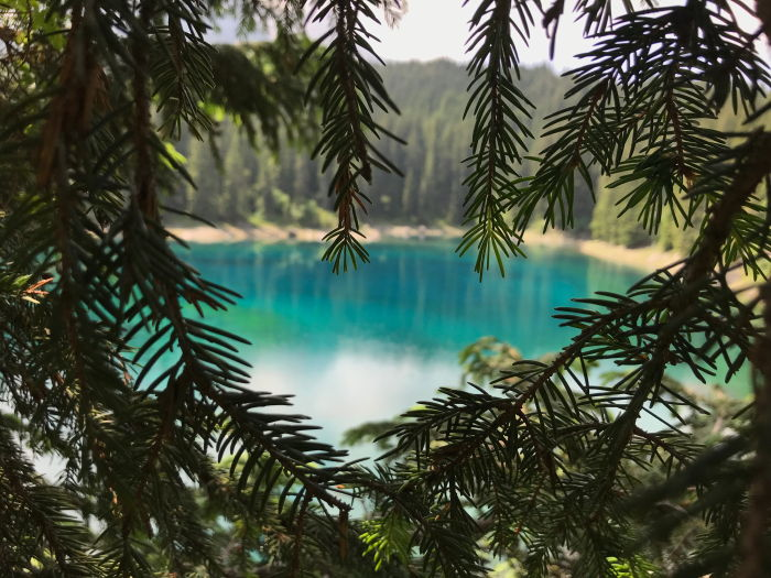 blue lake framed by pine tree leaves