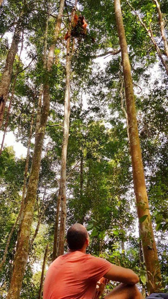 seeing wild orangutans on the Sumatra Jungle Trekking Tour