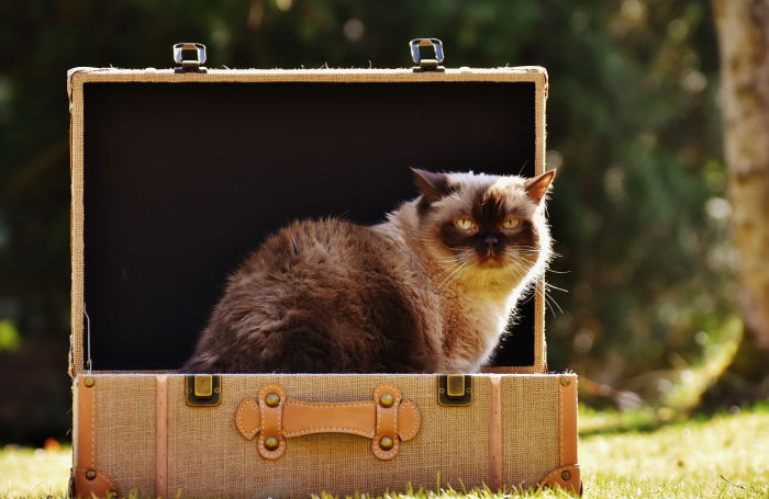 cat sitting in a suitcase