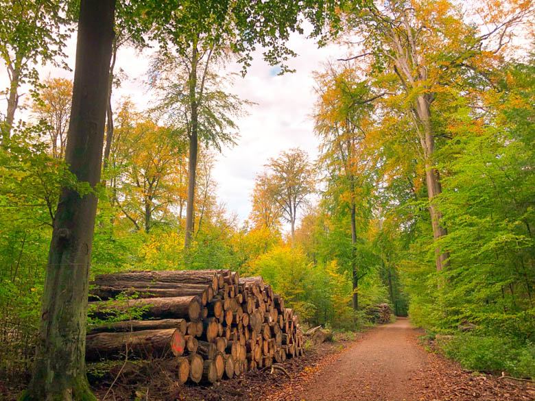 cycling in tegel forest in berlin with views of trees and nature trail