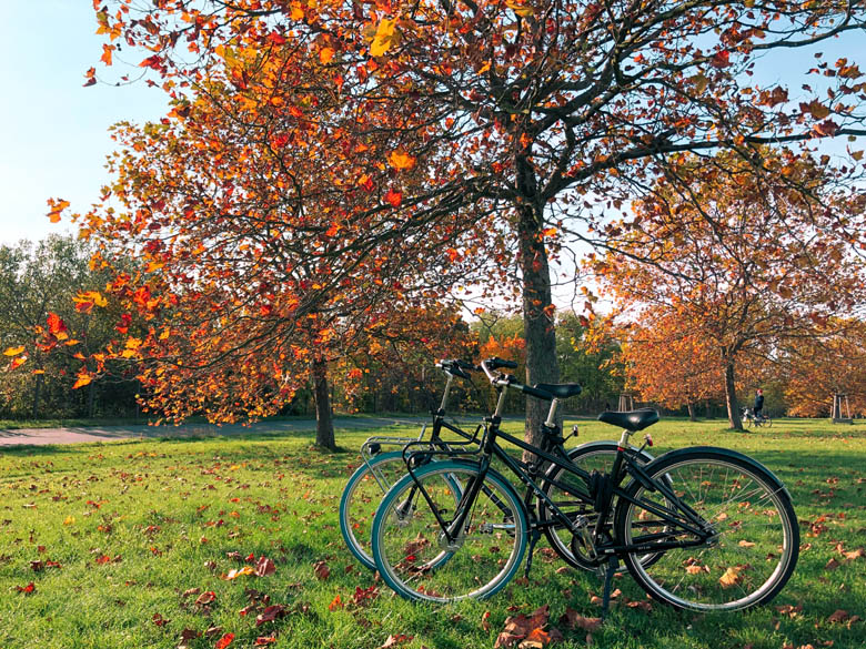 two swapfiets deluxe 7 bikes standing side by side under a tree with orange and red leaves in berlin germany