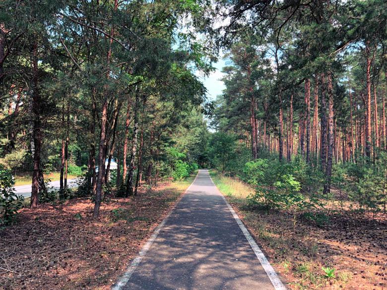 dedicated bicycle path between beech trees next to the highway or motorway in germany