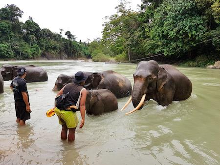 mahouts with their elephants at the tangkahan elephant sanctuary