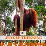 pinnable image for ultimate guide to jungle trekking in bukit lawang indonesia