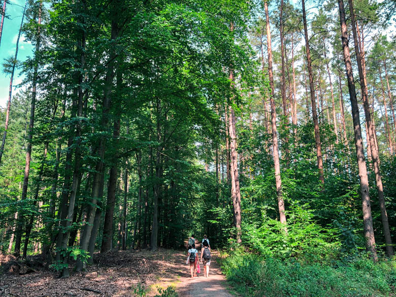green forested areas surrounding the lakes in berlin during summer with hikers on the trail
