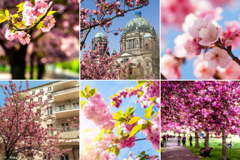 13 Best Places To See Cherry Blossoms in Berlin in 2021