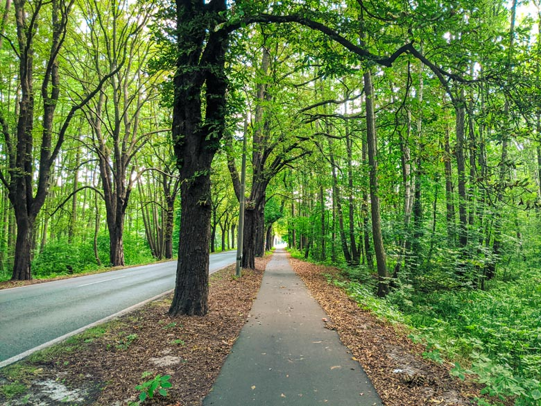 a dedicate cycling path and bike route to cycle from Berlin to Tonsee in the Brandenburg region