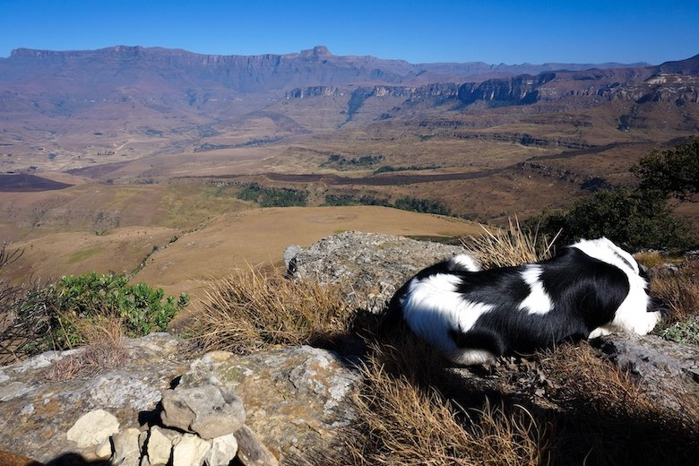 views overlooking the drakensberg amphitheatre