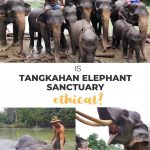 pinnable image to save tangkahan elephant sanctuary review
