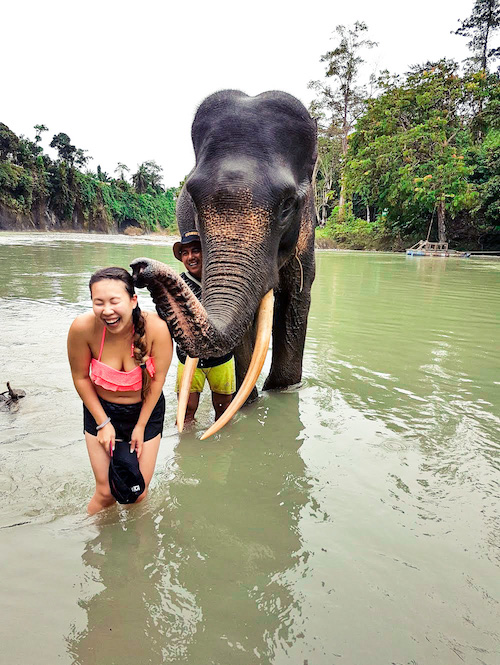 elephant kissing a woman at an elephant sanctuary in thailand
