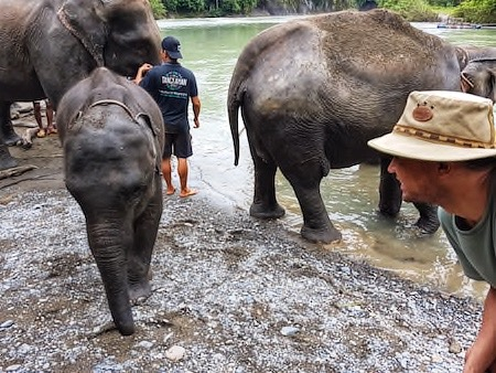 tips for responsible and ethical elephant tourism