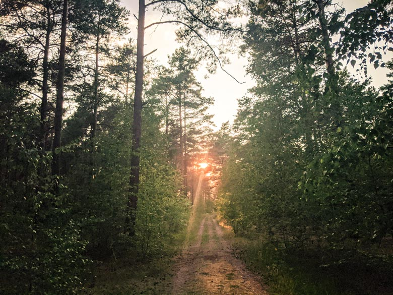 the sun setting in the distance with an orange glow amongst pine trees in the Dahme-Heideseen Nature Park outside Berlin