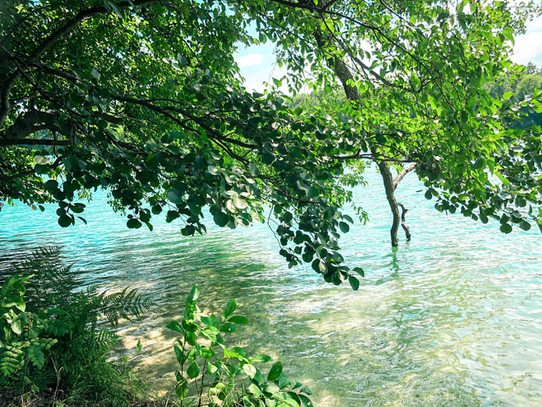 clear, glittering turquoise waters at liepnitzsee lake in berlin with a beech tree hanging over the surface