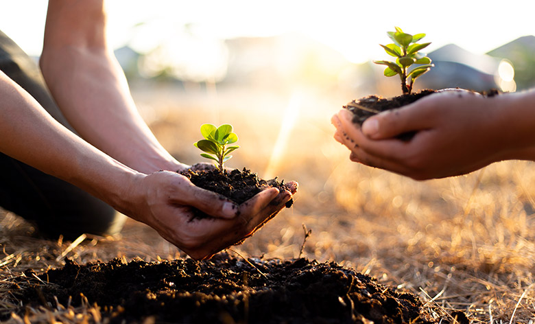 two people kneeling outside on dried golden veld while each cupping a handful of brown rich soil that contains a sprouting green plant and in the process of planting it in an open hole on the ground