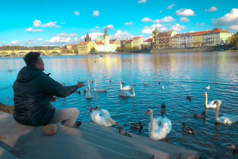 a man feeding swans and ducks at strelecky ostrov is one of the best secret prague attractions to do on a free walking tour in the city
