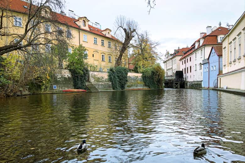 ducks swimming in the venice of prague is one of the best places to visit on a free prague walking tour
