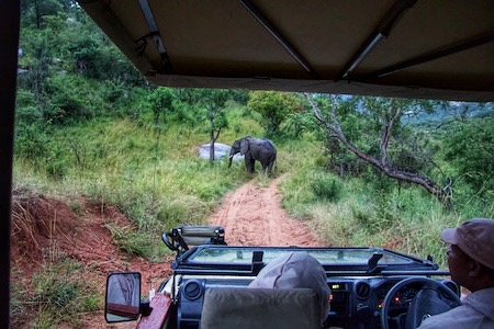 admiring an elephant from a safari car in south africa