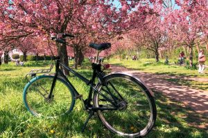 15 Things To Know About Bike Sharing in Europe: An Honest Swapfiets Review
