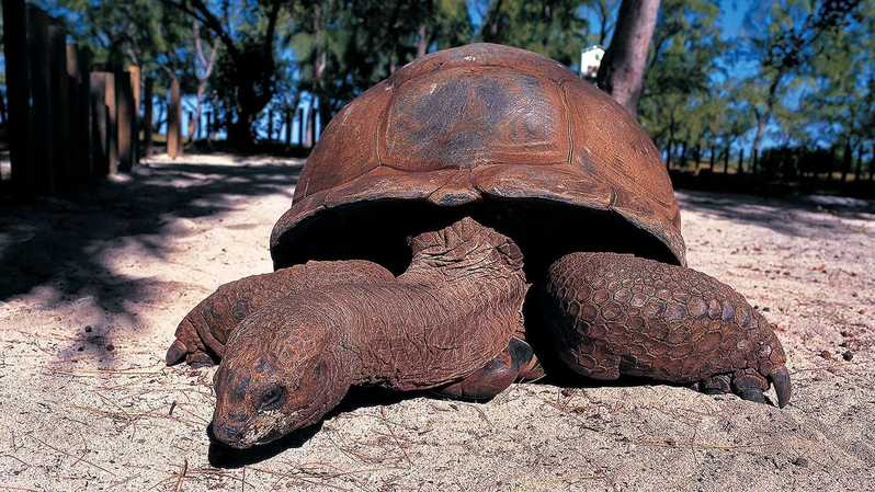 giant turtles on prison island is a top thing to do in tanzania