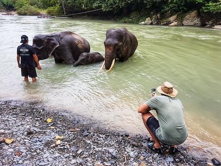 list of ethical elephant sanctuaries to visit