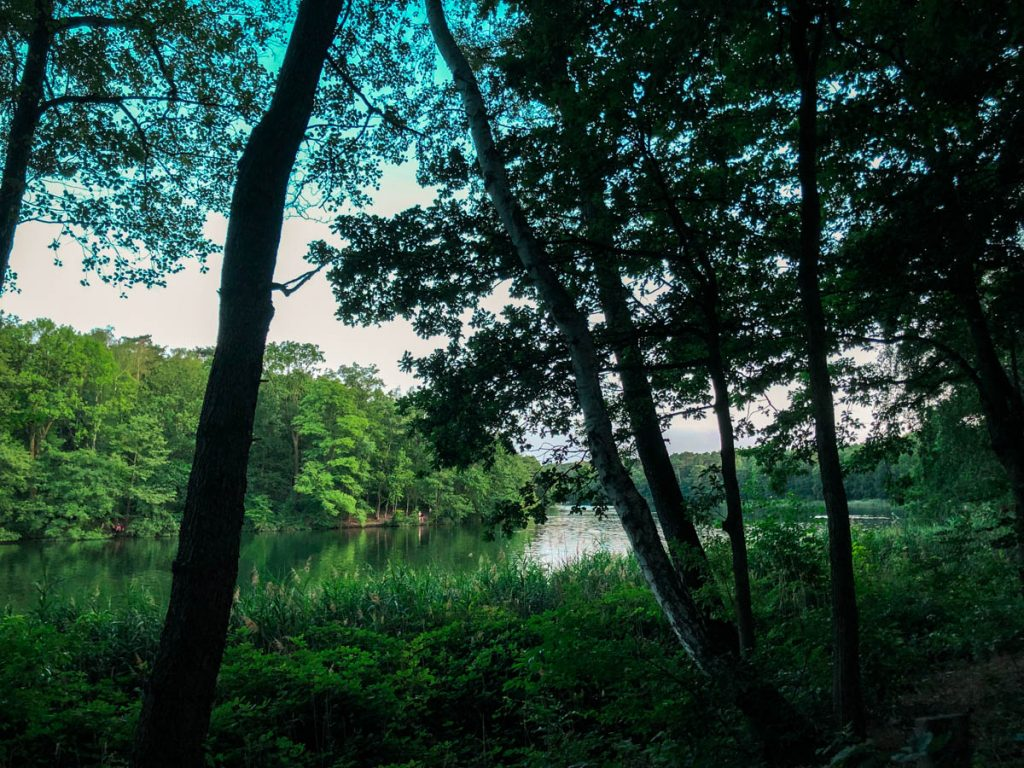 grunewald forest in berlin with view of trees and lake