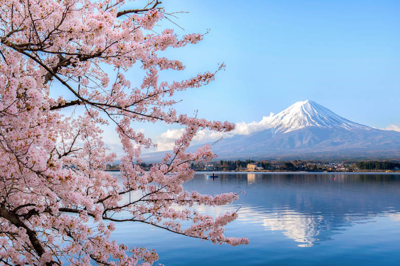 pink cherry blossoms in japan with mount fuji in the background against a blue sky